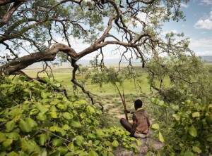 A young Hadza hunter surveys the Yaeda Valley. The Hadza of Tanzania are the world's last full-time hunter-gatherers. They live on what they find: game, honey, and plants, including tubers, berries, and baobab fruit.