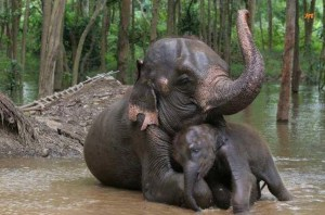 elephant-love-pictures-baby-mom-animals-cuddling-pics-images