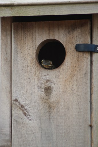 tree frog in a bird house