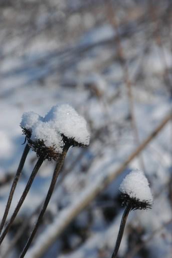 Snowy top