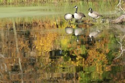 Fall on the Horicon Marsh