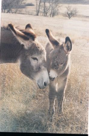mama burro and baby