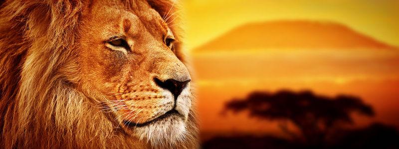 Citations de leaders: 40 citations pour développer votre leadership
