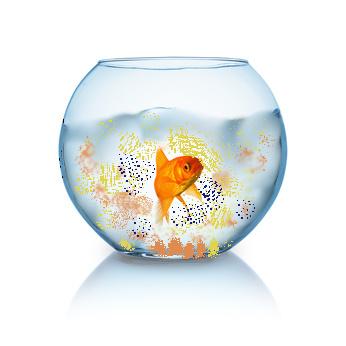 Milieu de vie du poisson, eau claire ou soupe indigeste?