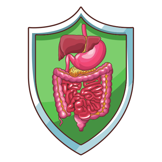 digestive system reva nature cure