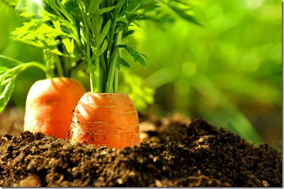 Carrot seed oil benefits for skin