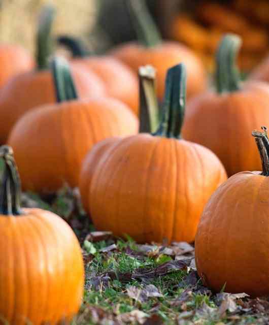 Malta Pumpkin Season