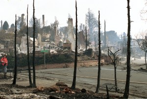 Chimneys of homes destroyed in the Oakland Hills by fire are visible beyond the black, charred trunks of trees also consumed by the firestorm which swept through the area in Oakland, Ca., Oct. 22, 1991.