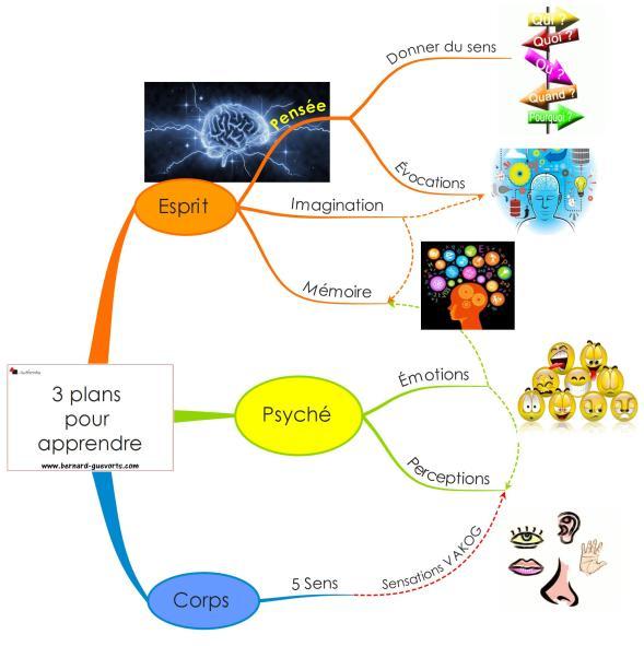 Mind mapping de l'apprentissage et sa relation avec le système nerveux