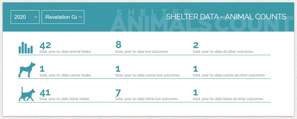 2020 shelter animal count screenshot