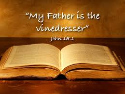 My Father is the vinedresser