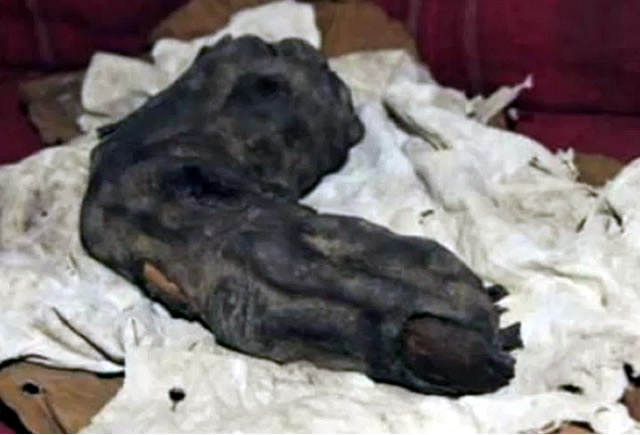 Egyptian Giant Mummy Finger