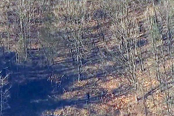 Newtown Bee-Man with Gun WAS in Woods!