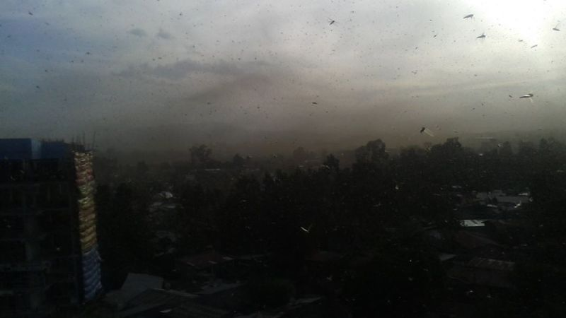 Millions of Locusts in the Sky in Addis Ababa
