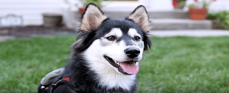 3D Printer Gives Dog New Life