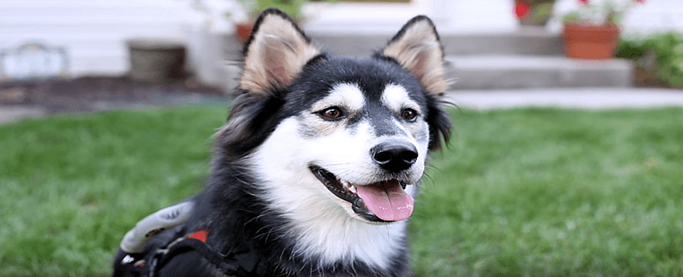3D Printer Gives Dog New Life