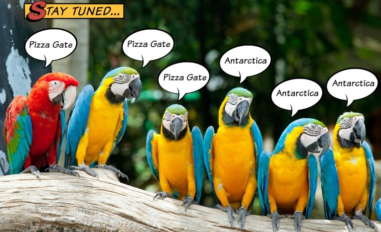 Parrots of the Echo Chamber