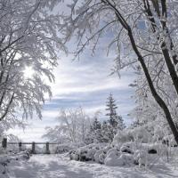 Capturing winter…