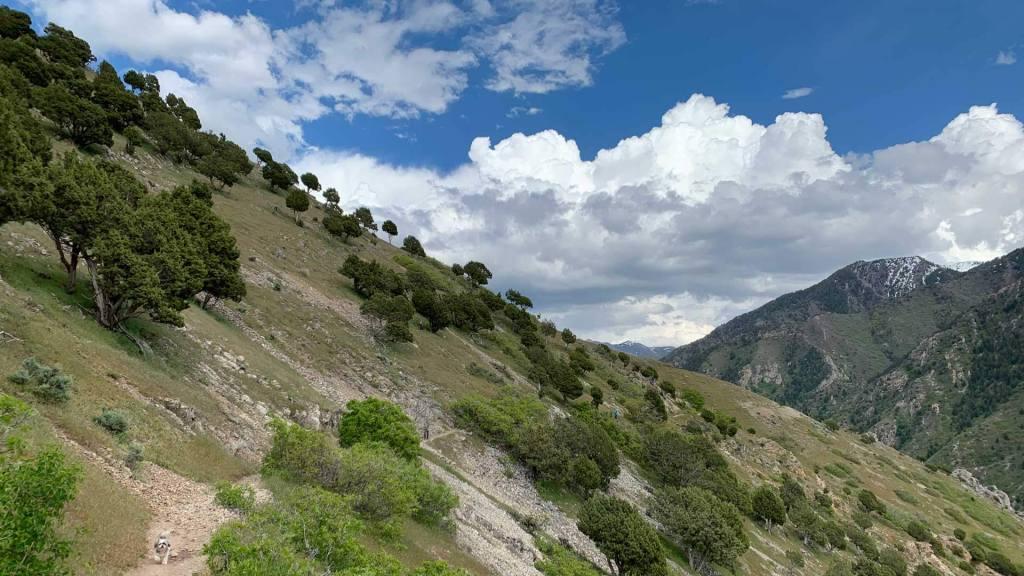 Rattlesnake Gulch Trail, Milcreek Canyon, Utah