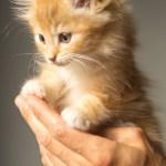 Natural Antibiotic Wellness Formula For Pets