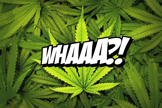Marijuana Weed legal Christian