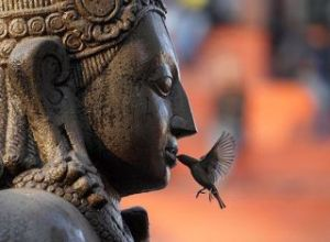 buddha birdkiss