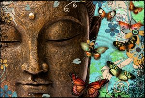 buddhafacebutterfly
