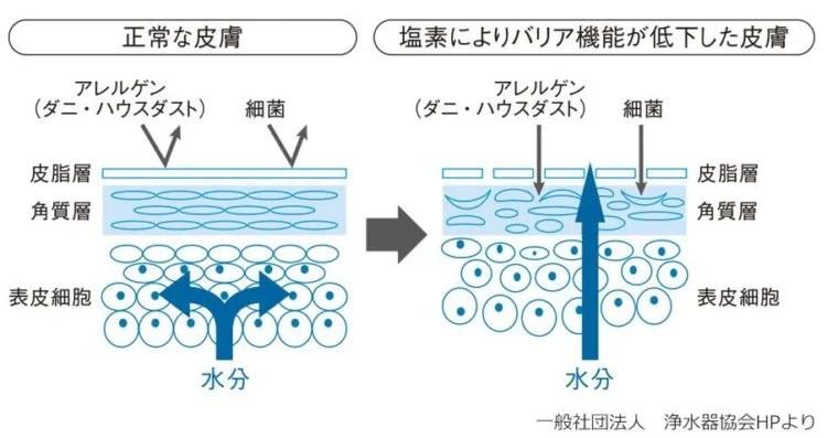 ↑塩素による皮膚へのダメージを図解したもの