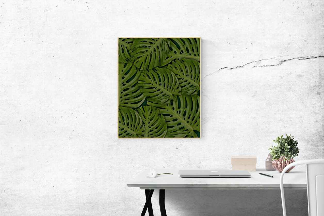 rectangular green swiss cheese leafed plant photo mounted on wall