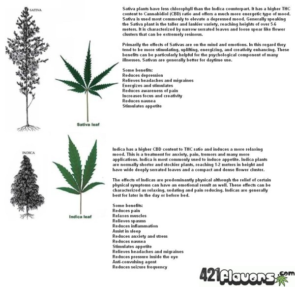 difference-btwn-sativa-indica