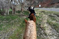 DSC_0904 - 2 - horses
