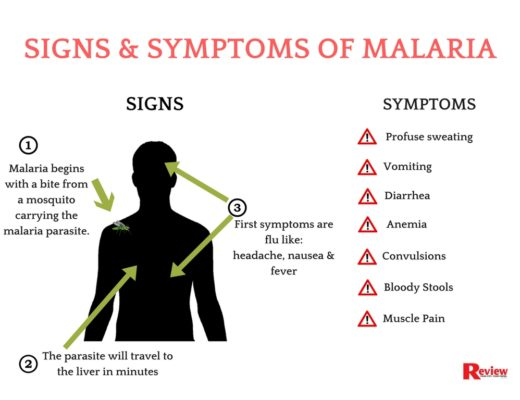 Image result for Symptoms of malaria
