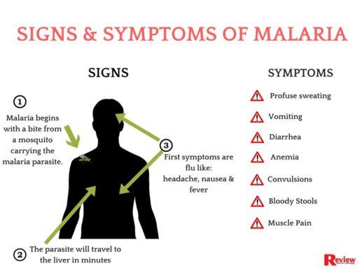 Image result for Symptoms of malaria