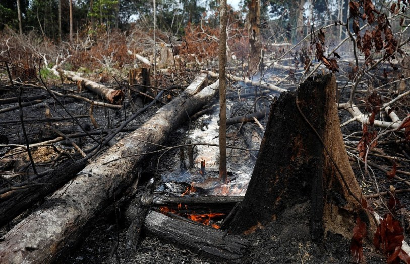 The Amazon is BURNING and Everyone Needs to Know 3