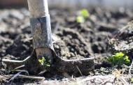 5 Best Shovel for Digging Up Roots