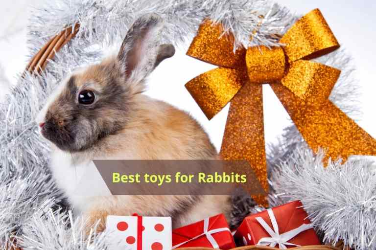 5 Best toys for rabbits