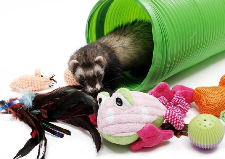 4 Best Toys for Ferrets