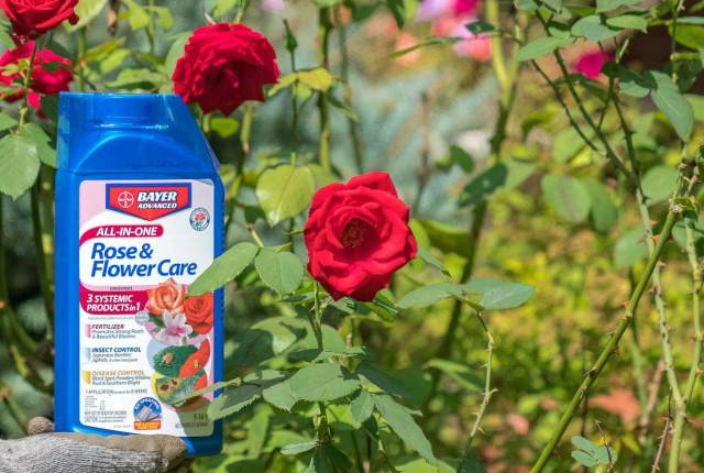 Bayer All-In-One Rose & Flower Care Concentrate