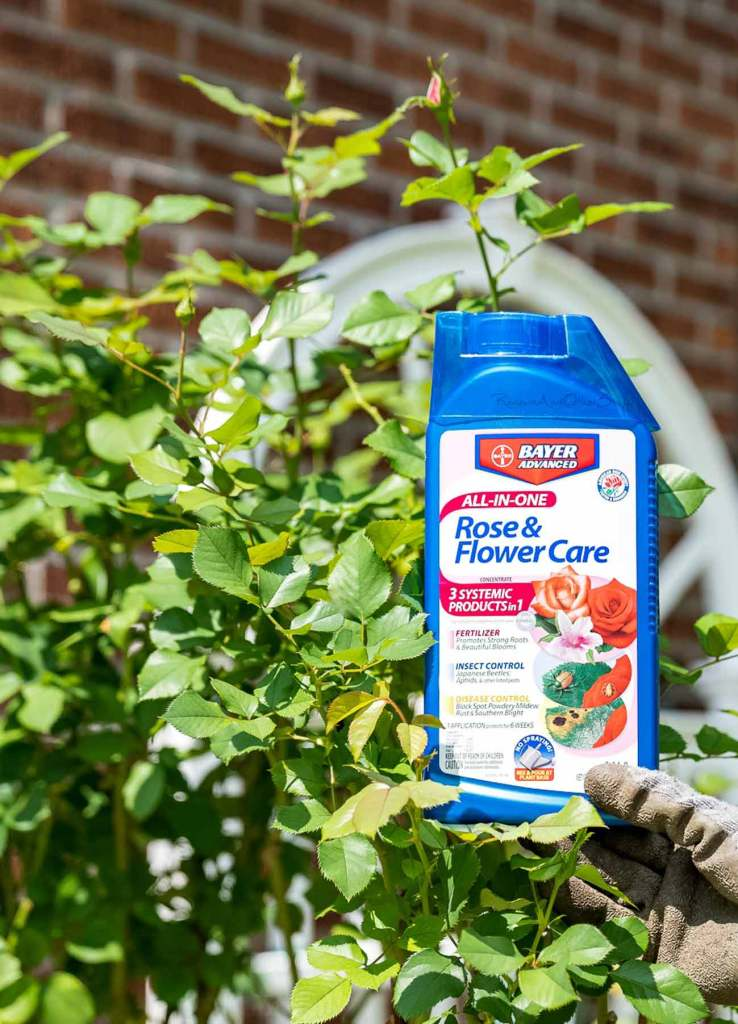 Bayer All-In-One Rose & Flower Care Concentrate liquid