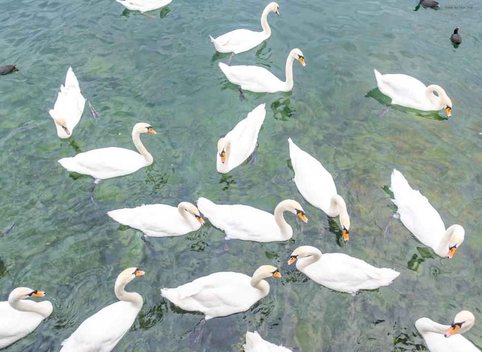 visiting lake zurich switzerland