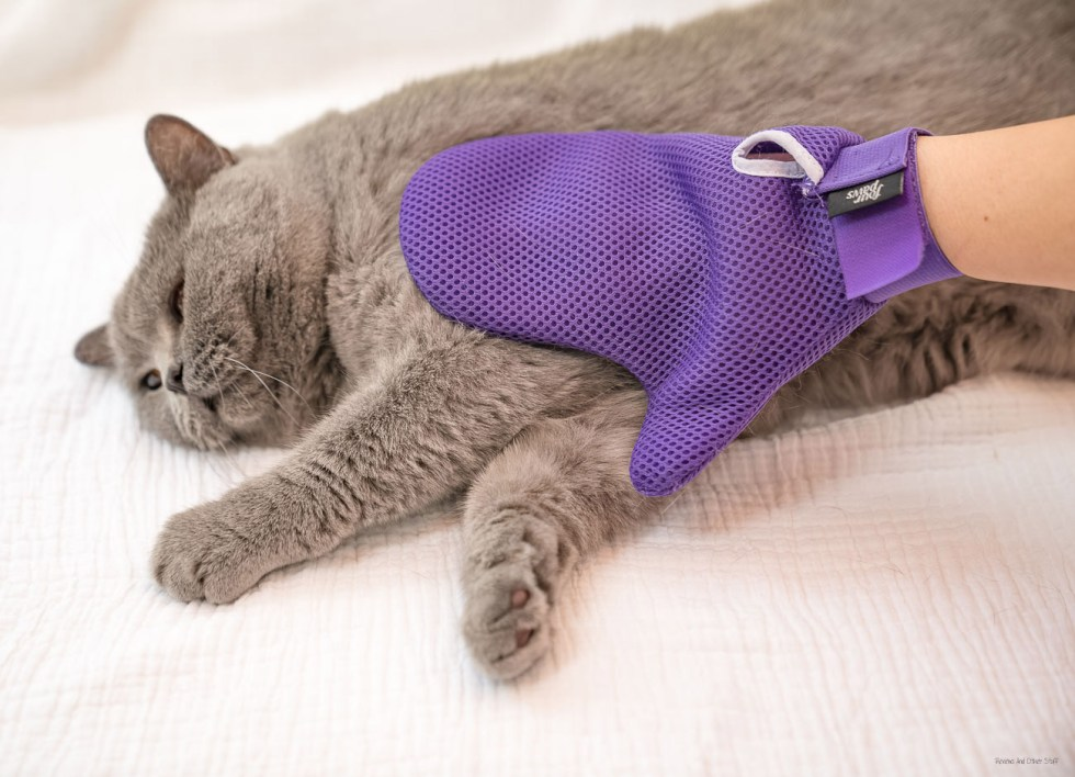 cat grooming mitt