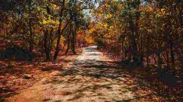 Polo Forest Review: Things to  do in Polo Forest - Best Place To Trekking In Gujarat