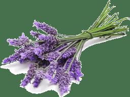 Mindbody Matrix Pain Cream - Lavender