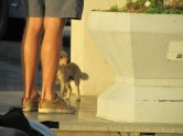 some dude's legs and a puppy