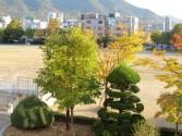 Spring view from my classroom, daegu 2012