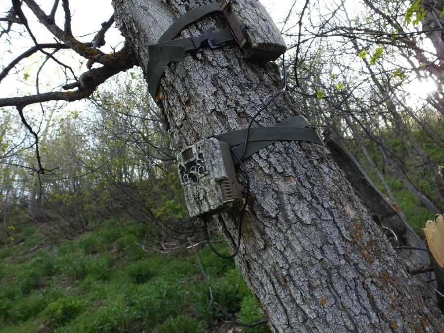 Browning strike trail camera review