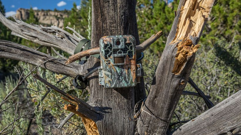 Top Best Trail Camera Uses
