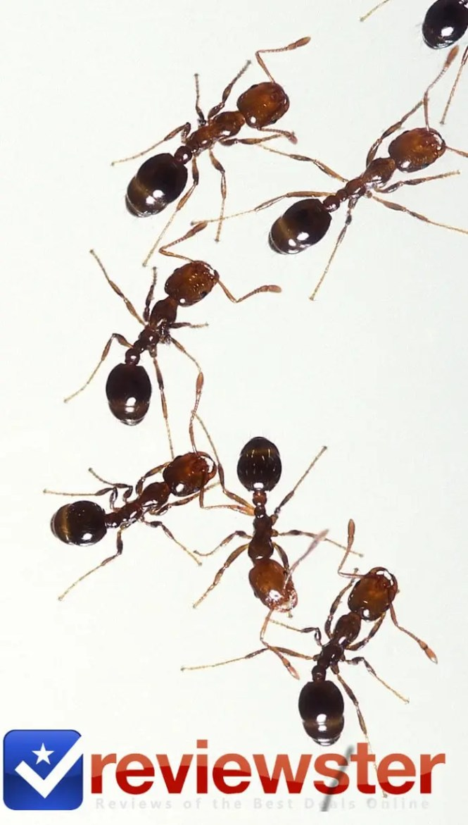 Images Of Raid Ant And Cockroach Killer Review