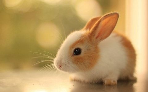 Baby rabbit. Image credit funmozar.com