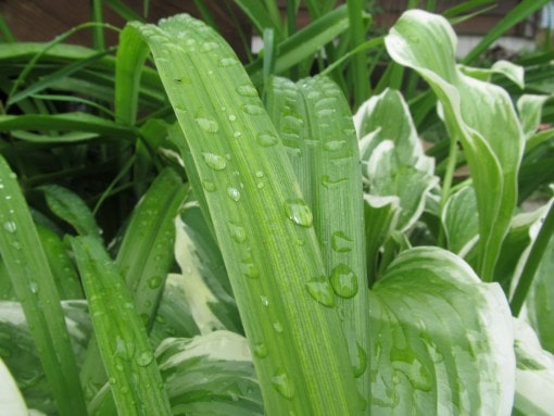 The rate of transpiration is influenced by any number of things. Image credit wordpress.com
